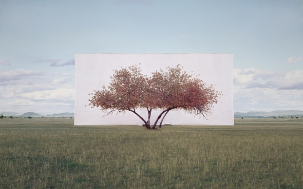 large-myoung_ho_lee-tree_2-2011