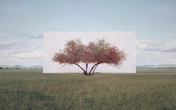 large-myoung_ho_lee-tree_2-2011
