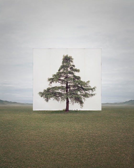 large-myoung_ho_lee-tree_6-2014