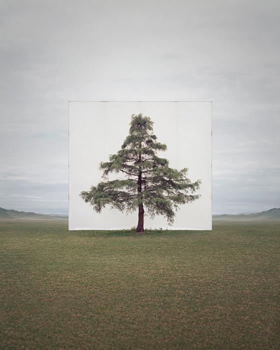 large-myoung_ho_lee-tree_6-2014